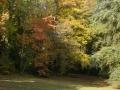 champignons_sous_arbres_centenaires