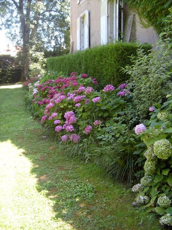 fleurs_haie_hortensias_2